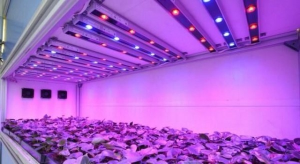 LED strip grow light